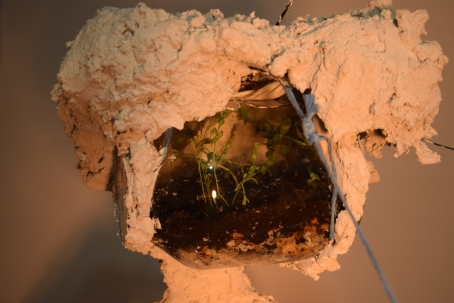 IL CROGIOLO - TERRARIUM CLOSE UP